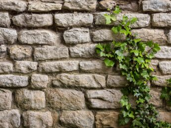 Fixez au mur sans percer femme actuelle le mag - Comment se debarrasser du lierre ...