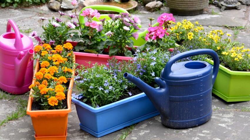 Comment composer une belle jardinière selon Stéphane Marie
