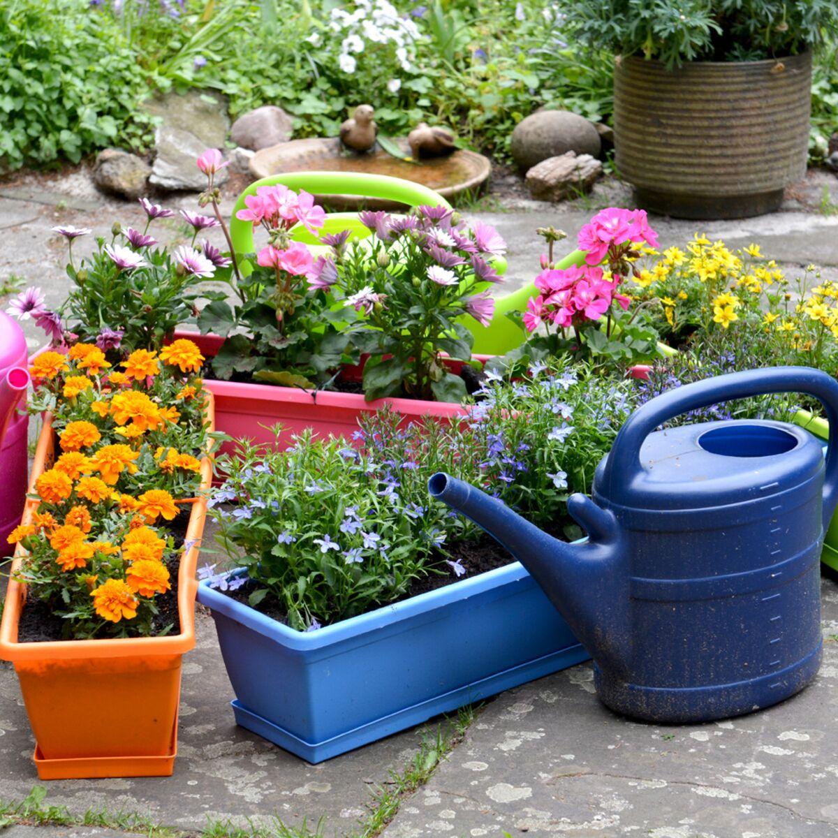 Plantes Pour Terrasse Sud Est comment composer une belle jardinière selon stéphane marie