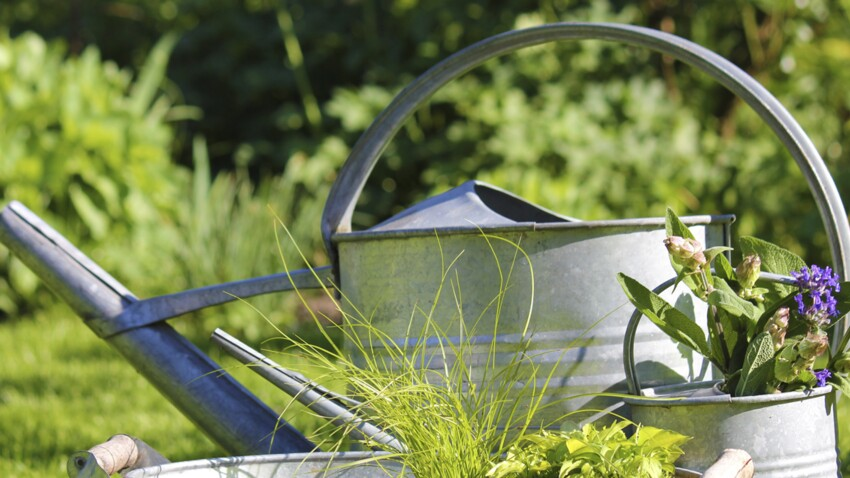Conseils en vidéo pour jardiner au naturel