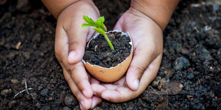 Contre les pesticides, choisissons les bonnes graines