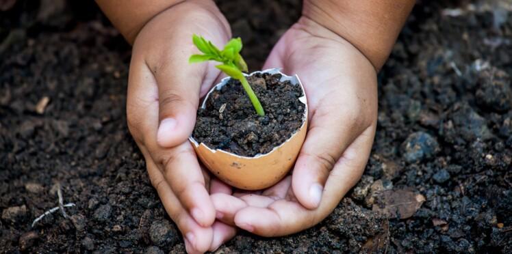 Contre les pesticides, semons les bonnes graines : des semences paysannes !