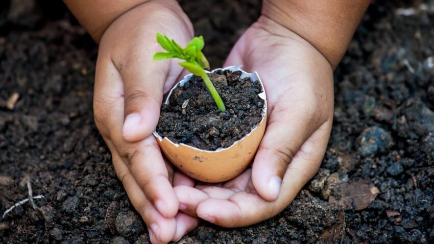 Contre les pesticides, et pour des fruits et légumes nutritifs, semons les bonnes graines : des semences paysannes !