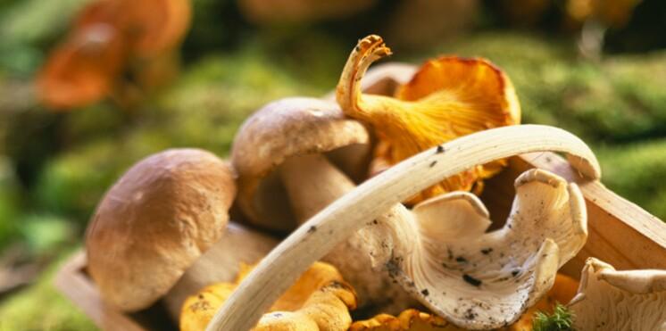 Cueillir des champignons : tous nos conseils