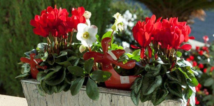 Cyclamens : 5 idées de jardinières d'intérieur