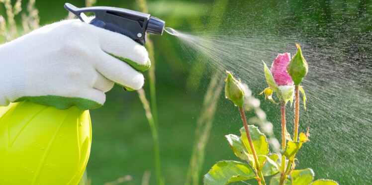 L'eau oxygénée, une alliée étonnante au jardin
