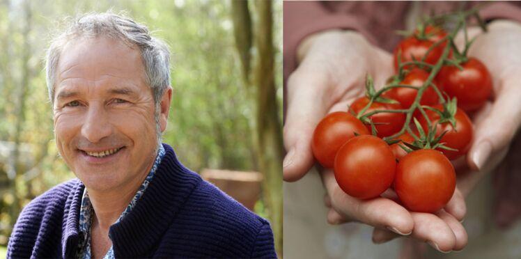 """Entretien des tomates : les conseils de Stéphane Marie de """"Silence ça pousse !"""""""