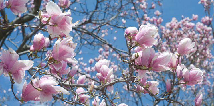 Equinoxe de printemps : enfin les beaux jours