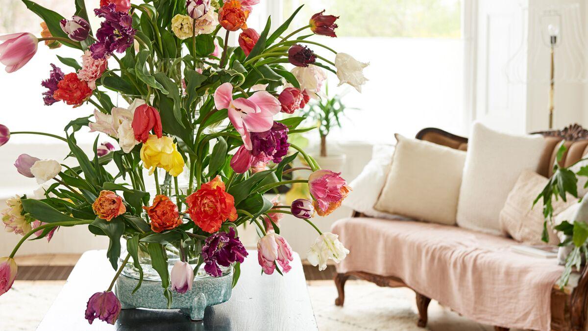 Faire Germer Un Marron D Inde tulipe : comment bien la faire pousser et conserver ses