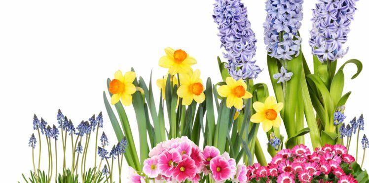 Jacinthes et cie, comment faire durer les fleurs en bulbes