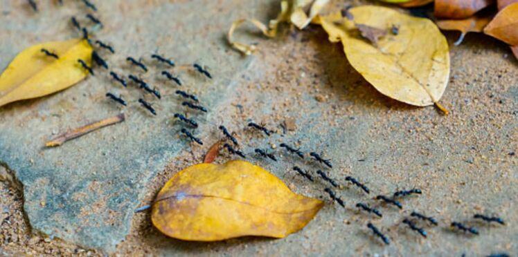 Jardin : 10 anti-fourmis naturels et efficaces