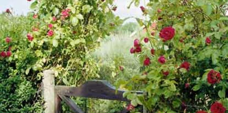 Un beau jardin écologique
