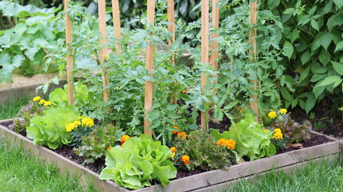 Comment Faire Un Beau Jardin jardin en lasagnes : comment cultiver facilement ? : femme