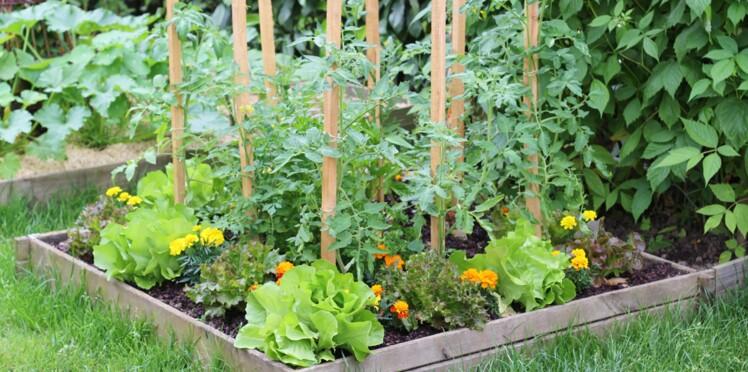 Jardin en lasagnes : comment cultiver facilement ?