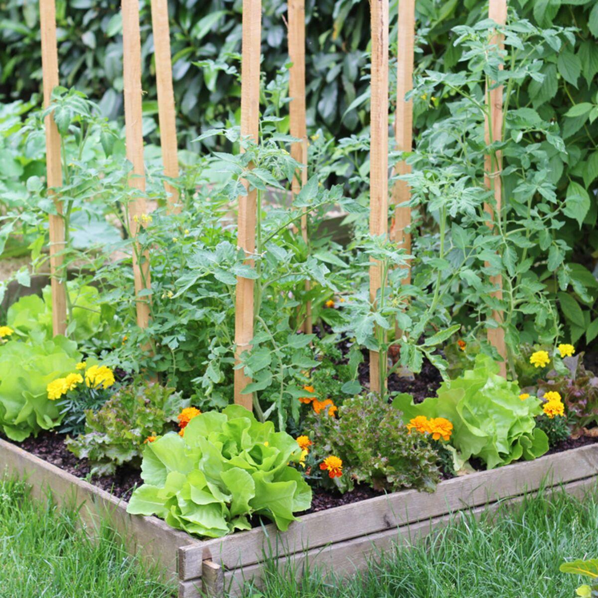 Le Jardin Potager En Janvier jardin en lasagnes : comment cultiver facilement ? : femme
