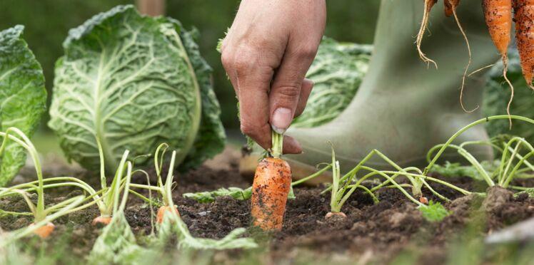 Jardiner avec la lune : les tâches au jour le jour