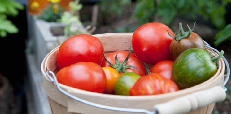 Les bons gestes pour jardiner bio
