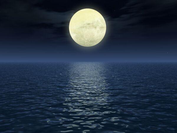 Comment entretenir ses hortensias les conseils de st phane marie de silence a pousse - Comment jardiner avec la lune ...