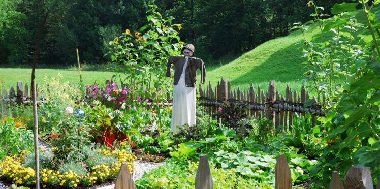 Juillet au jardin : quels travaux réaliser ?