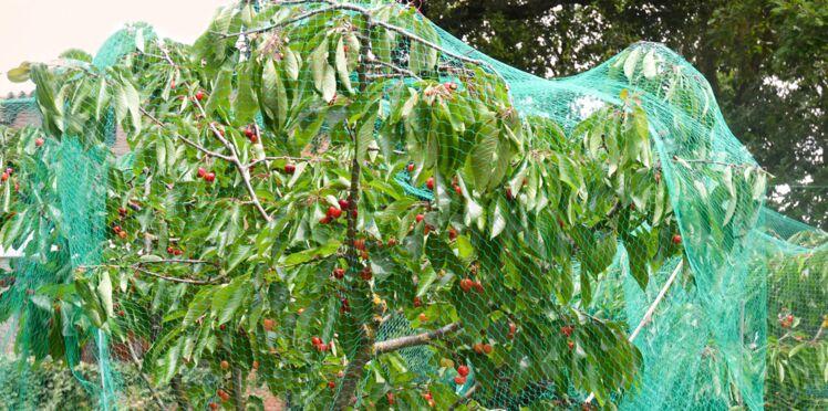 Juin au jardin : quels travaux réaliser?