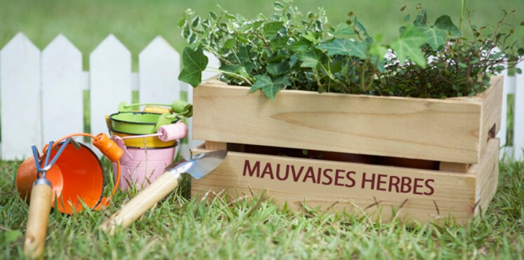 Le bicarbonate, ça sert à quoi au jardin ?