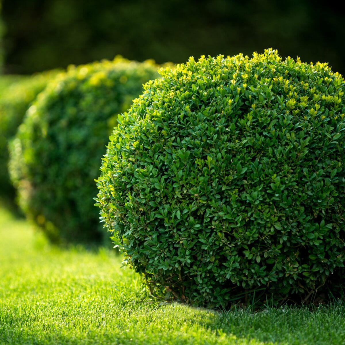 Comment Se Débarrasser Des Bambous Dans Le Jardin au jardin d'ornement : femme actuelle le mag