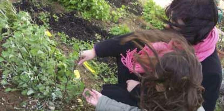 A la découverte d'un jardin partagé