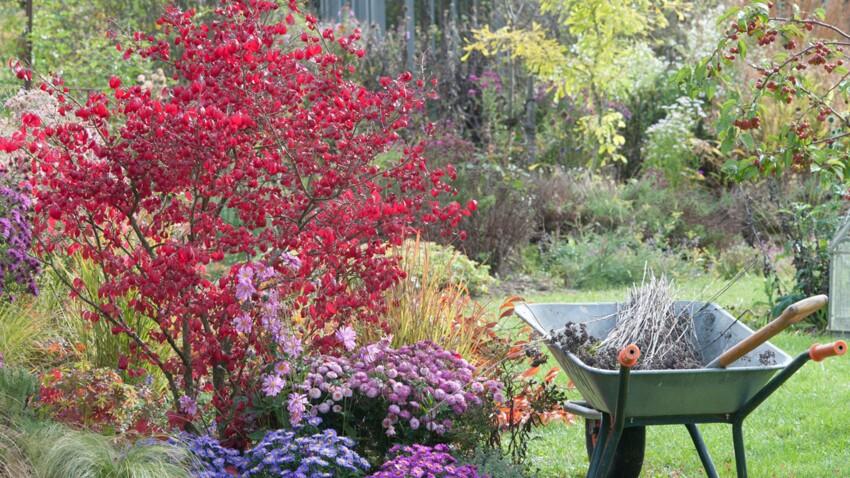 Novembre au jardin : quels travaux réaliser ?