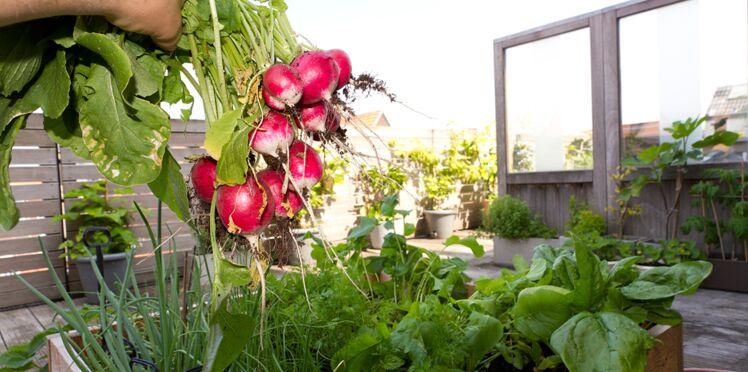 Permaculture : son potager urbain produit 300 kg de fruits et légumes