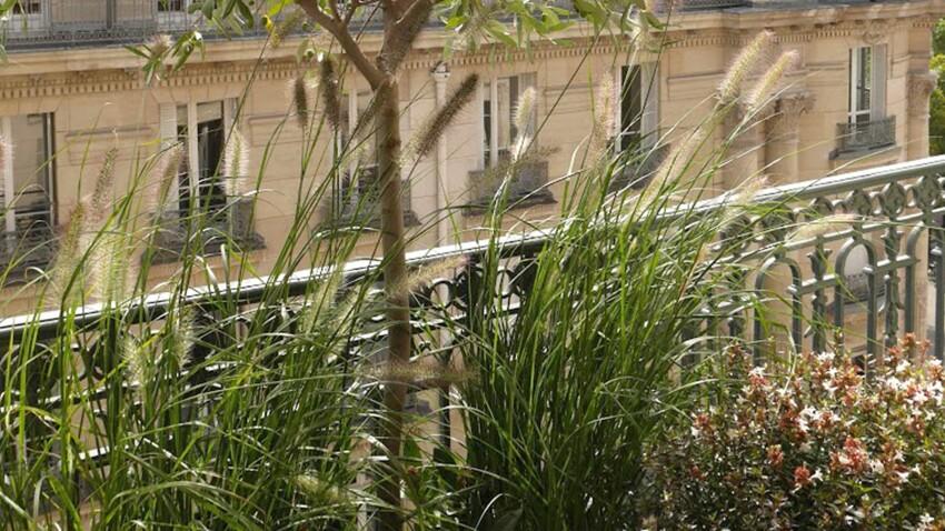 Des plantes au balcon : nos conseils pour lutter contre le réchauffement climatique