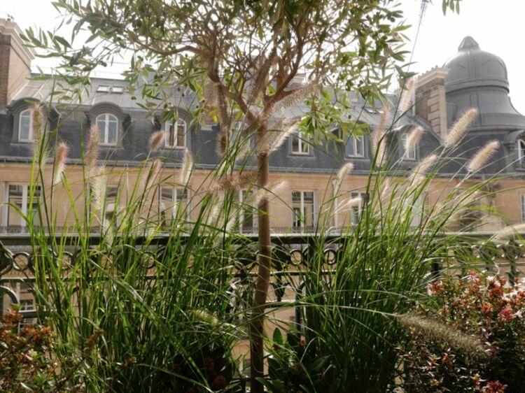 Des Plantes Au Balcon Nos Conseils Pour Lutter Contre Le