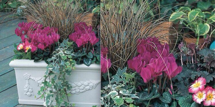 Pour l'hiver, une jardinière en rose et vert