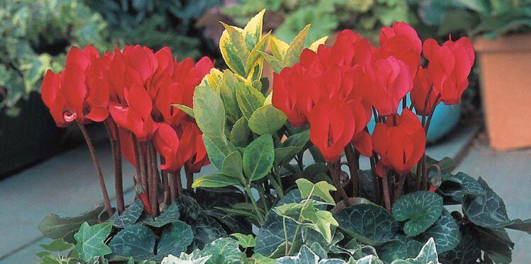 Pour l'hiver, une jardinière en vert et rouge