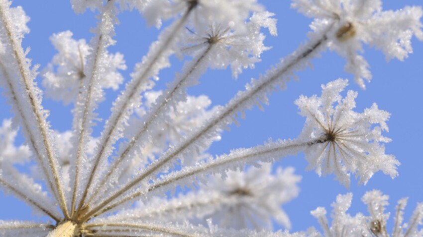 Comment protéger son jardin du froid ?
