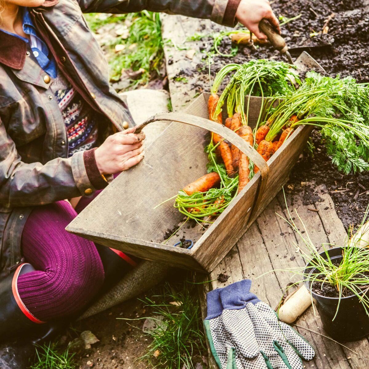 Quoi Mettre Au Potager En Septembre que planter en automne : femme actuelle le mag