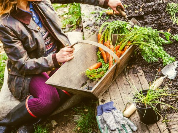 comment r aliser une jardini re d 39 automne femme actuelle le mag. Black Bedroom Furniture Sets. Home Design Ideas