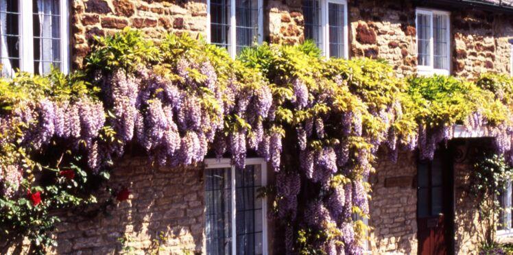 Quelle plante grimpante pour habiller ma façade ?