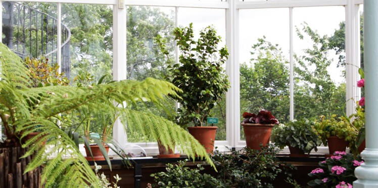 Quelles plantes choisir pour un jardin d\'hiver ? : Femme Actuelle Le MAG