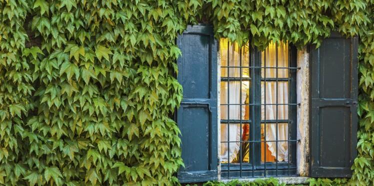 Comment réaliser son propre mur végétal