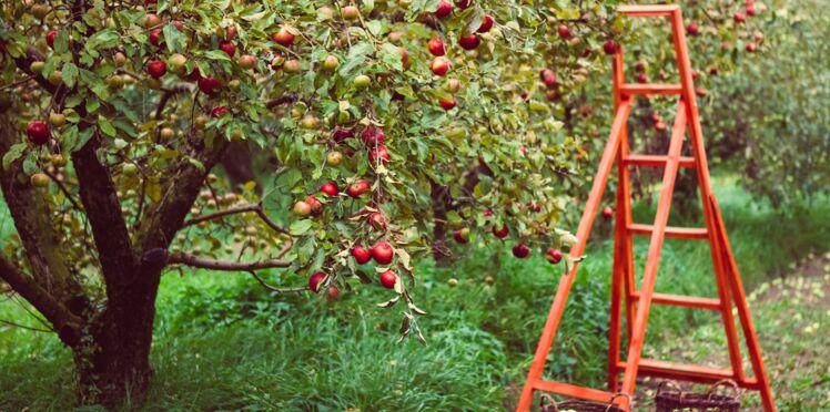 Septembre au jardin : quels travaux réaliser ?