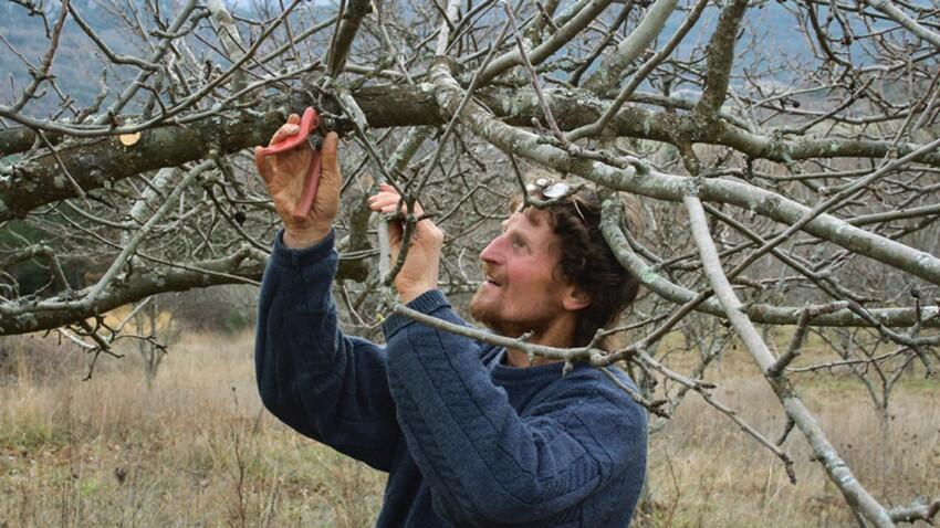 Tailler ses arbres fruitiers : mode d'emploi