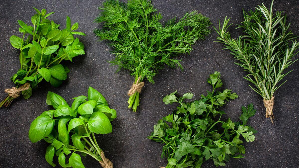 Top 19 de nos herbes aromatiques préférées : leurs usages cuisine