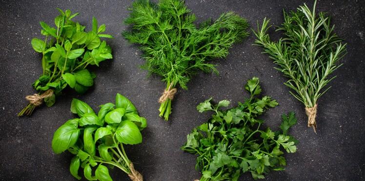 Top 5 de nos herbes aromatiques préférées : leurs usages cuisine et santé
