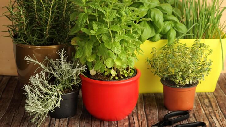 Video Comment Creer Une Jardiniere D Aromatiques Femme