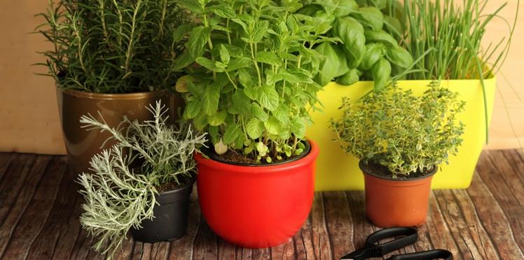 Vidéo : comment créer une jardinière d'aromatiques ?