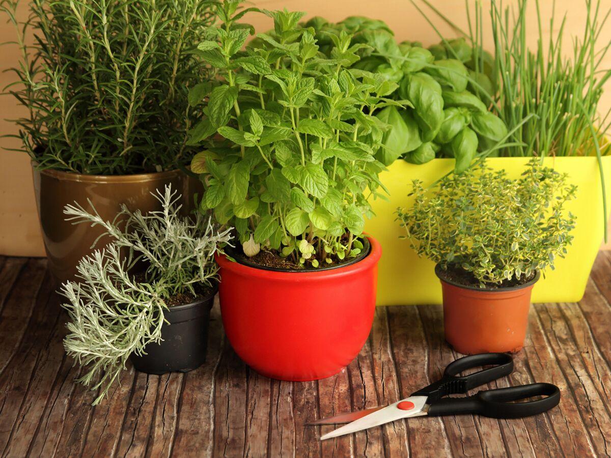 Planter Herbes Aromatiques Jardiniere vidéo : comment créer une jardinière d'aromatiques ? : femme