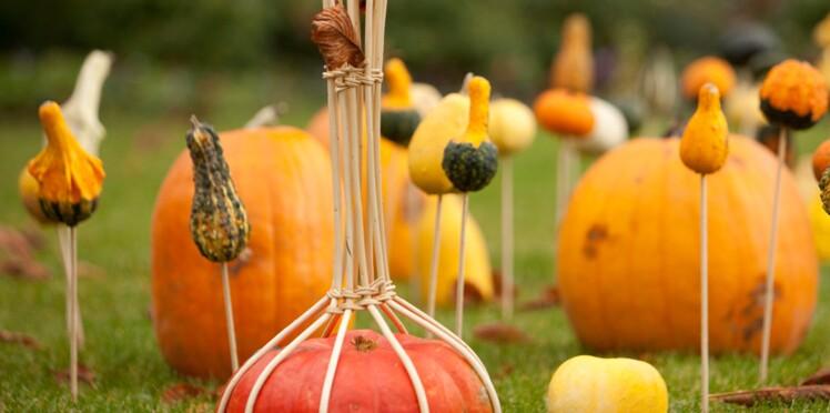 Balade en famille: festival d'automne à Chaumont