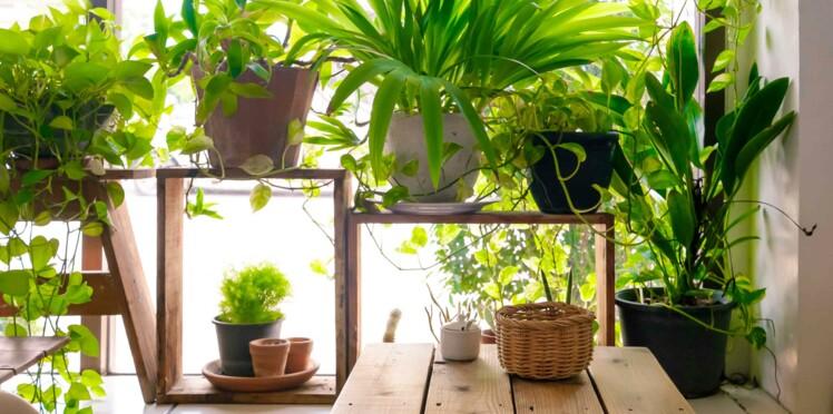 Cet été, Bio C'Bon s'occupe de vos plantes gratuitement !