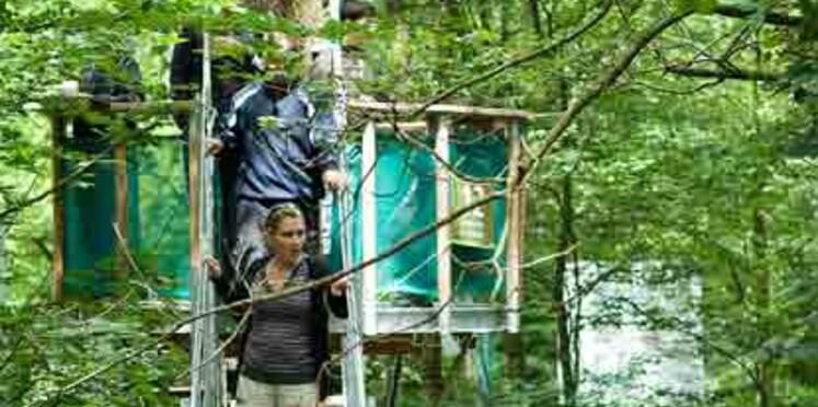 Dans les arbres à Rambouillet