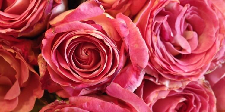 De nouvelles variétés de roses débarquent à la rentrée